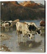 Shepherd With Cows On The Lake Shore Acrylic Print