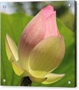 Sherbert Flower Acrylic Print