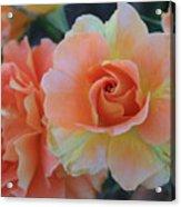 Sherbert Rose Acrylic Print