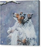 Shetland Sheepdog With Chickadee Acrylic Print