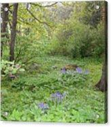 Shetland Woods Acrylic Print
