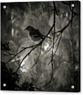 Shhhh A Bird Acrylic Print
