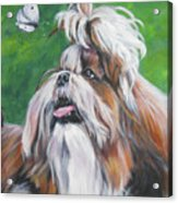 Shih Tzu And Butterfly Acrylic Print