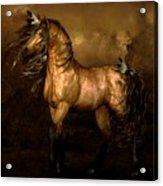 Shikoba Choctaw Horse Acrylic Print