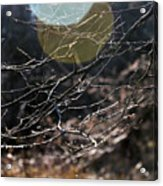 Shimmering Branches Acrylic Print