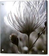 Shimmering Flower I Acrylic Print