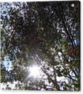Shinning Sun Acrylic Print