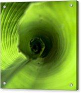 Shiny Green Plant Acrylic Print