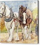 Shire Horses Acrylic Print