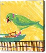 Shirley's Bird Acrylic Print