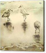 Shore Birds At Sunset Acrylic Print