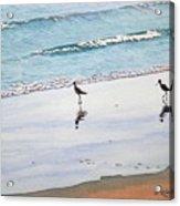 Shore Birds Acrylic Print