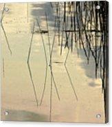 Shore Lines Acrylic Print