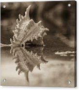 Shore Shell In Sepia Acrylic Print