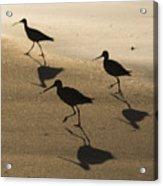 Shorebird Silhouettes Acrylic Print