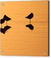 Shorebirds On The Sea At Sunrise Acrylic Print