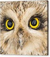 Short-eared Owl Face Acrylic Print