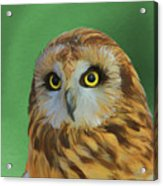 Short Eared Owl On Green Acrylic Print