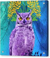 Owl At Night Acrylic Print
