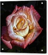 Show Me A Rose Acrylic Print