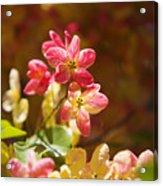 Shower Tree Blossoms Acrylic Print