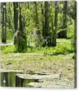 Shreks Swamp Acrylic Print