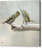 shrewish Girlitze Acrylic Print