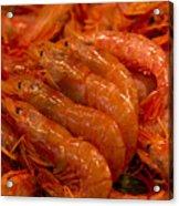 Shrimps Acrylic Print