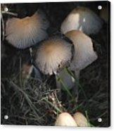 Shrooms 1 Acrylic Print