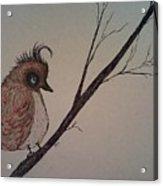 Shy Bird Acrylic Print