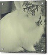 Shy Bunny Acrylic Print