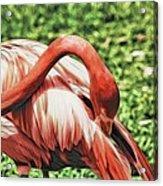 Shy Flamingo Acrylic Print