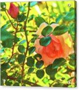 Sketchy Rose Acrylic Print