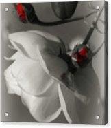 Shy White Rose Acrylic Print