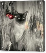 Siamese Cat In Black And White Acrylic Print