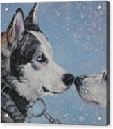 Siberian Huskies In Snow Acrylic Print by Lee Ann Shepard