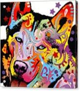 Siberian Husky 2 Acrylic Print by Dean Russo