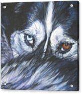 Siberian Husky Eyes Acrylic Print