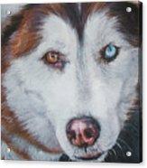 Siberian Husky Red Acrylic Print by Lee Ann Shepard