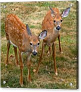 Siblings Visit Acrylic Print