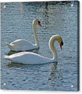Side By Side For Life  Acrylic Print