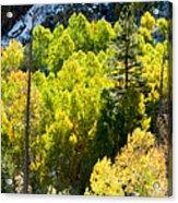 Sierra Fall Forest Acrylic Print