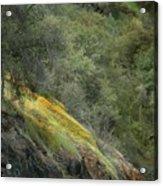 Sierra Poppies Acrylic Print