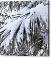 Sierra Winter Acrylic Print