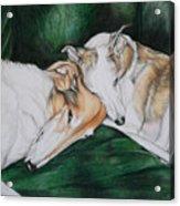Sighthound Comfort Acrylic Print