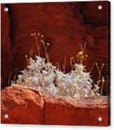 Signs Of Life - Valley Of Fire State Park Acrylic Print