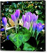 Signs Of Spring I Acrylic Print