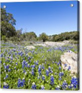 Signs Of Spring In Texas Acrylic Print