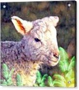 Silence Of The Lamb Acrylic Print