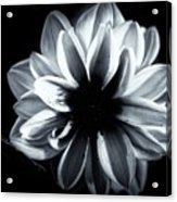 Silent Beauty  Acrylic Print
